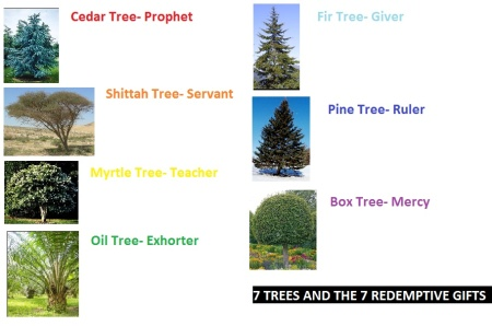7 trees 7 gift